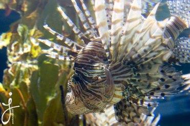JLongo_Aquarium_1400_web