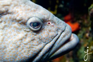 JLongo_Aquarium_886_web