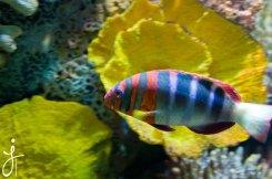 JLongo_Aquarium_920_web
