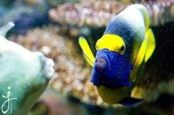 JLongo_Aquarium_937_web