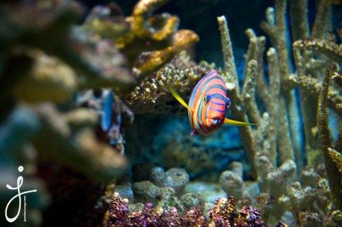 JLongo_Aquarium_943_web