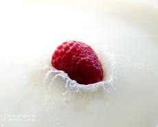 JLongo_splash_70_web