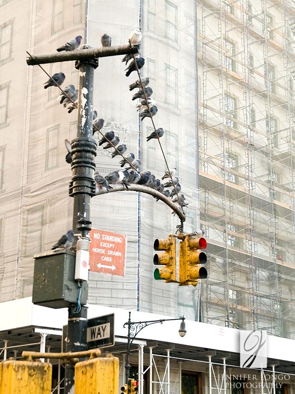 Pigeons Darping